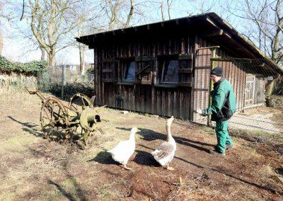 Tierhaltung 3_sm